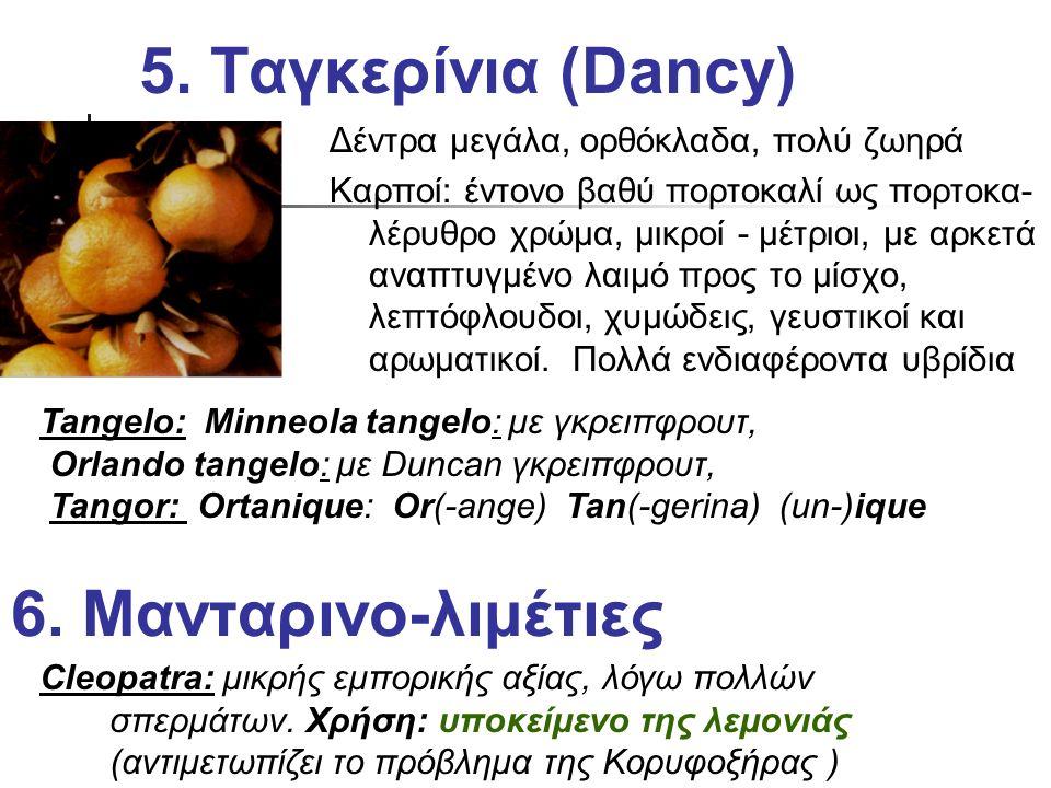 5. Ταγκερίνια (Dancy) 6. Μανταρινο-λιμέτιες