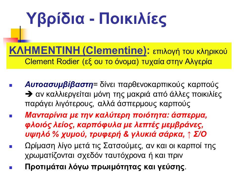 Υβρίδια - Ποικιλίες ΚΛΗΜΕΝΤΙΝΗ (Clementine): επιλογή του κληρικού Clement Rodier (εξ ου το όνομα) τυχαία στην Αλγερία.