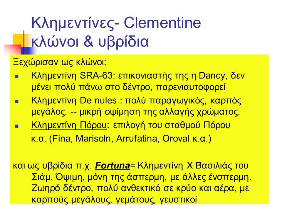 Κλημεντίνες- Clementine κλώνοι & υβρίδια