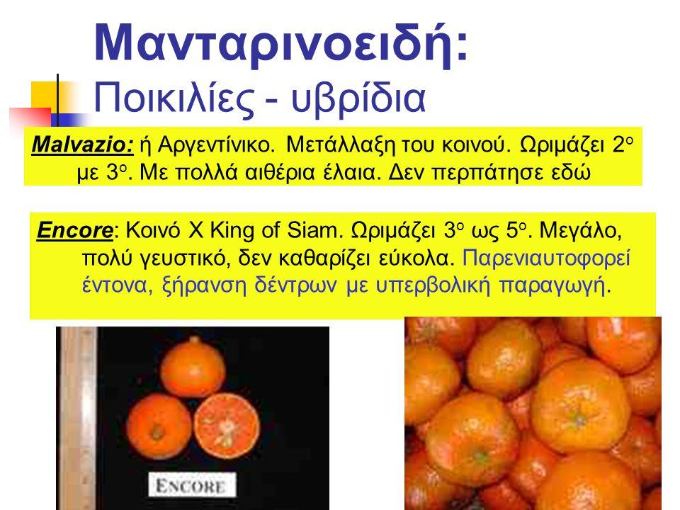 Μανταρινοειδή: Ποικιλίες - υβρίδια