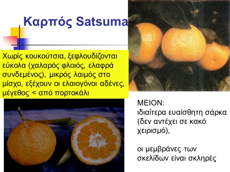 Καρπός Satsuma