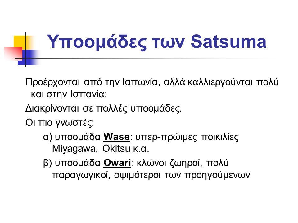 Υποομάδες των Satsuma Προέρχονται από την Ιαπωνία, αλλά καλλιεργούνται πολύ και στην Ισπανία: Διακρίνονται σε πολλές υποομάδες.