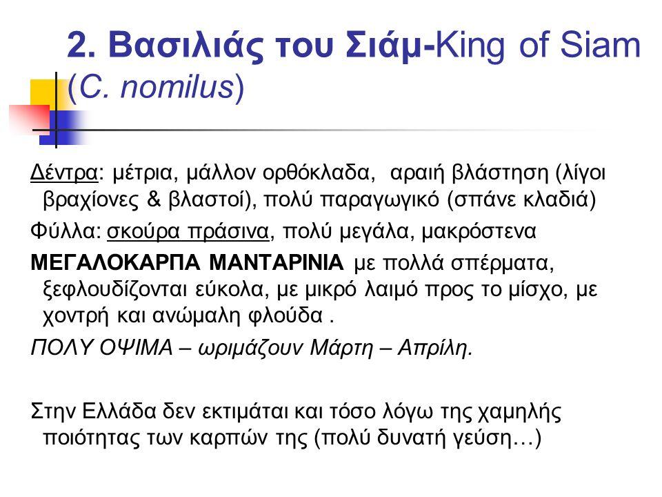 2. Βασιλιάς του Σιάμ-King of Siam (C. nomilus)