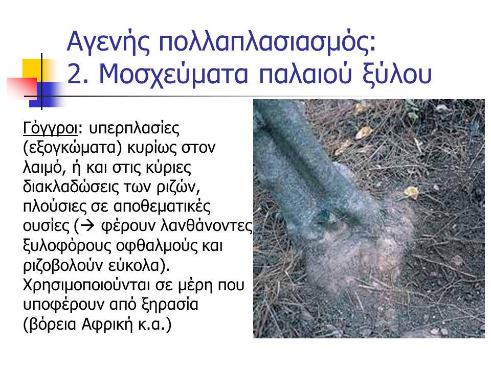 Αγενής πολλαπλασιασμός: 2. Μοσχεύματα παλαιού ξύλου