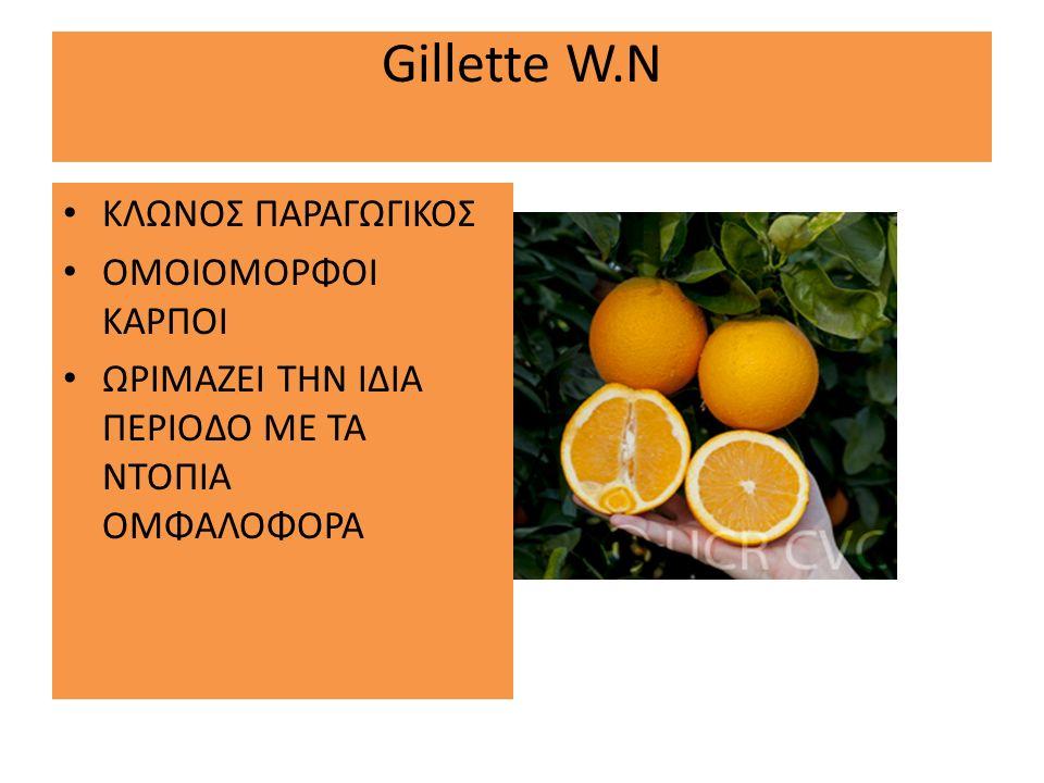 Gillette W.N ΚΛΩΝΟΣ ΠΑΡΑΓΩΓΙΚΟΣ ΟΜΟΙΟΜΟΡΦΟΙ ΚΑΡΠΟΙ