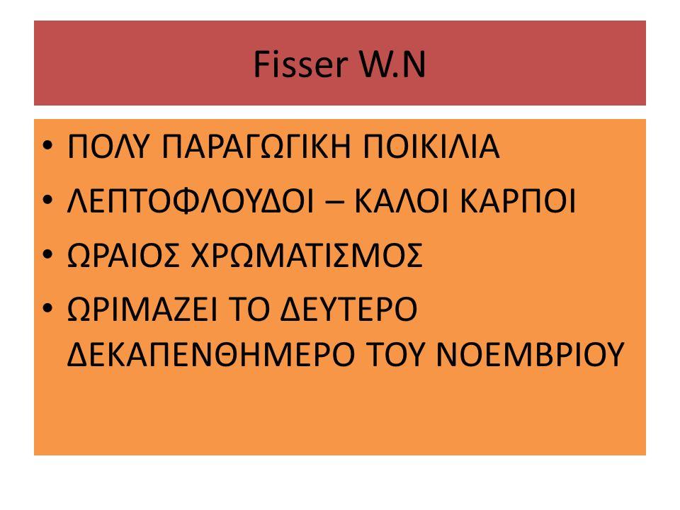 Fisser W.N ΠΟΛΥ ΠΑΡΑΓΩΓΙΚΗ ΠΟΙΚΙΛΙΑ ΛΕΠΤΟΦΛΟΥΔΟΙ – ΚΑΛΟΙ ΚΑΡΠΟΙ