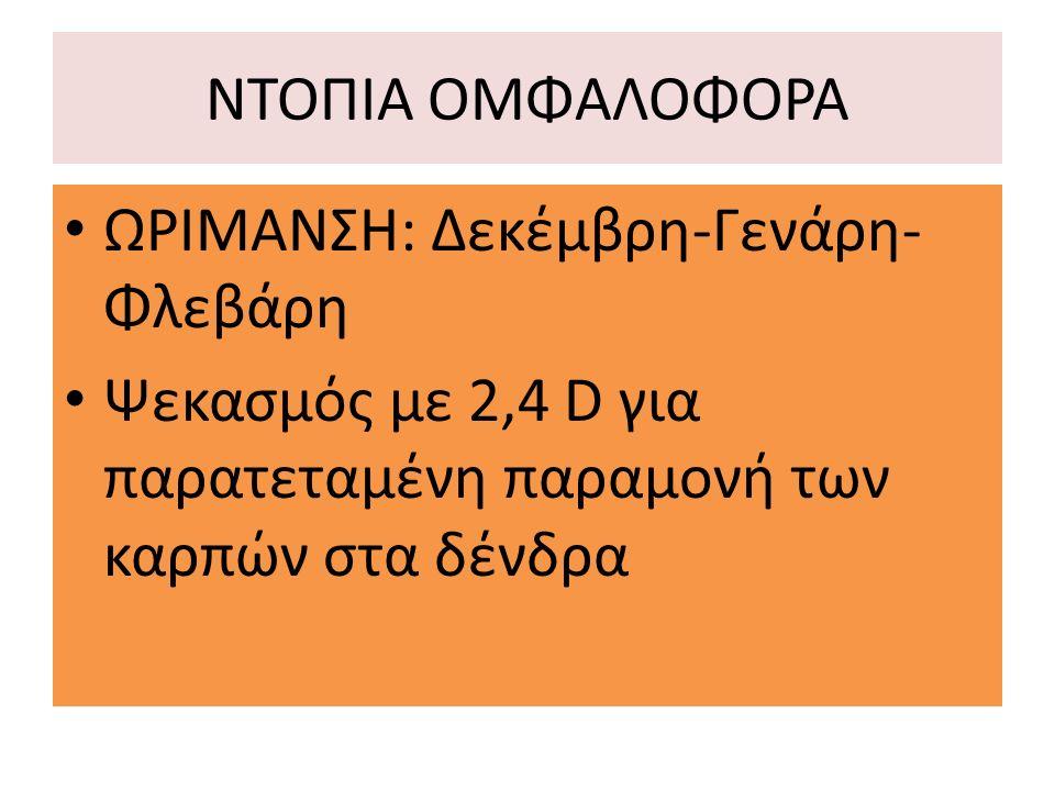 ΝΤΟΠΙΑ ΟΜΦΑΛΟΦΟΡΑ ΩΡΙΜΑΝΣΗ: Δεκέμβρη-Γενάρη-Φλεβάρη.