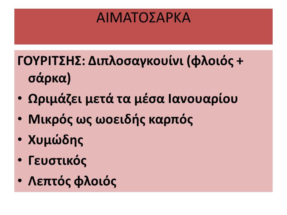 ΑΙΜΑΤΟΣΑΡΚΑ ΓΟΥΡΙΤΣΗΣ: Διπλοσαγκουίνι (φλοιός + σάρκα)
