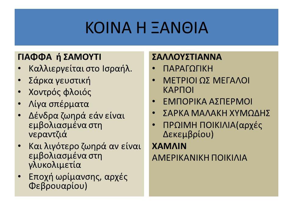 KOINA H ΞΑΝΘΙΑ ΓΙΑΦΦΑ ή ΣΑΜΟΥΤΙ Καλλιεργείται στο Ισραήλ.