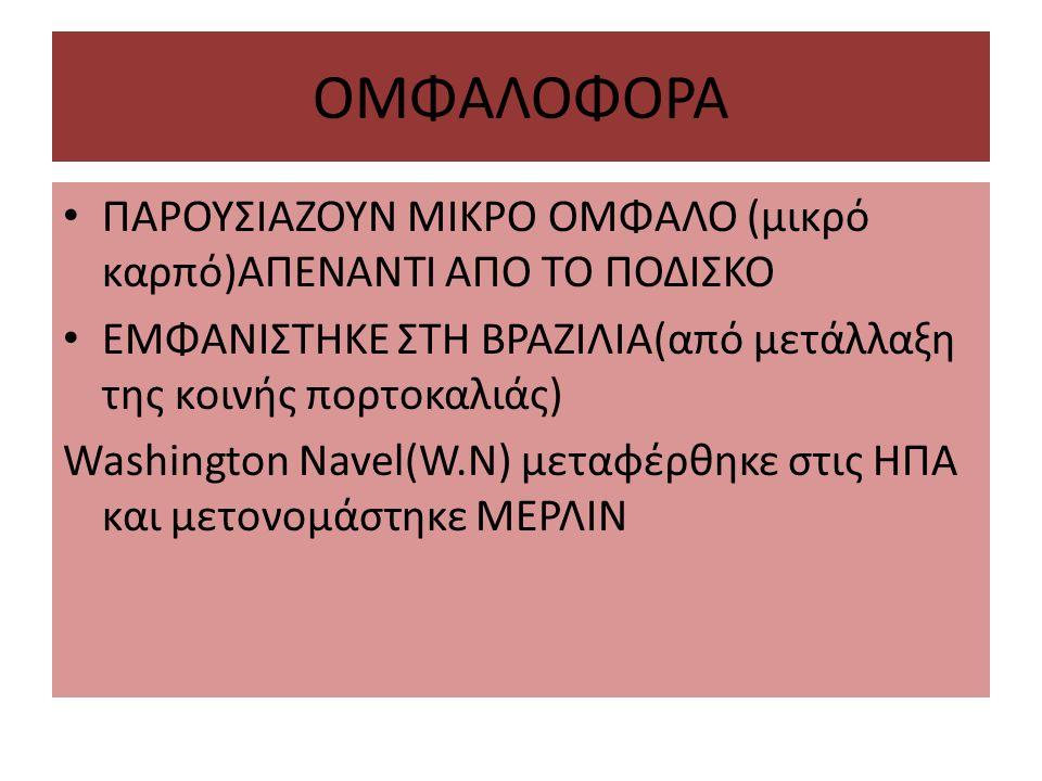 ΟΜΦΑΛΟΦΟΡΑ ΠΑΡΟΥΣΙΑΖΟΥΝ ΜΙΚΡΟ ΟΜΦΑΛΟ (μικρό καρπό)ΑΠΕΝΑΝΤΙ ΑΠO ΤΟ ΠΟΔΙΣΚΟ. ΕΜΦΑΝΙΣΤΗΚΕ ΣΤΗ ΒΡΑΖΙΛΙΑ(από μετάλλαξη της κοινής πορτοκαλιάς)
