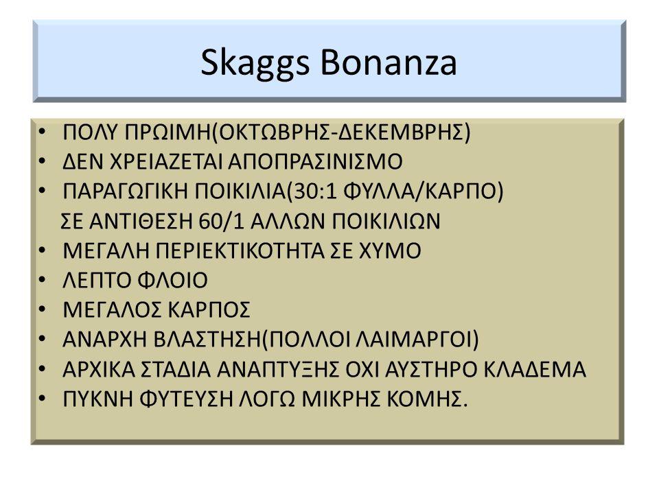 Skaggs Bonanza ΠΟΛΥ ΠΡΩΙΜΗ(ΟΚΤΩΒΡΗΣ-ΔΕΚΕΜΒΡΗΣ)
