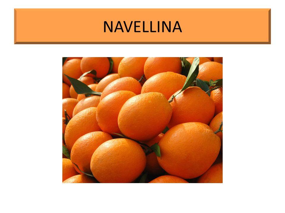 NAVELLINA