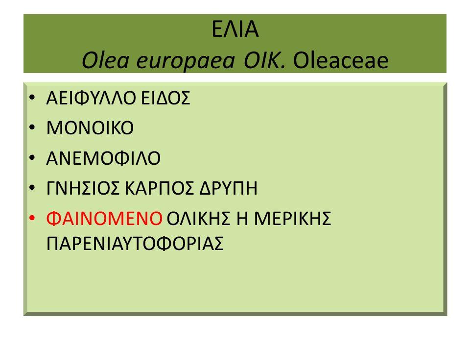ΕΛΙΑ Olea europaea ΟΙΚ. Oleaceae