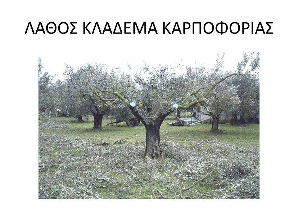 ΛΑΘΟΣ ΚΛΑΔΕΜΑ ΚΑΡΠΟΦΟΡΙΑΣ