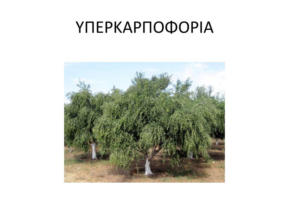 ΥΠΕΡΚΑΡΠΟΦΟΡΙΑ