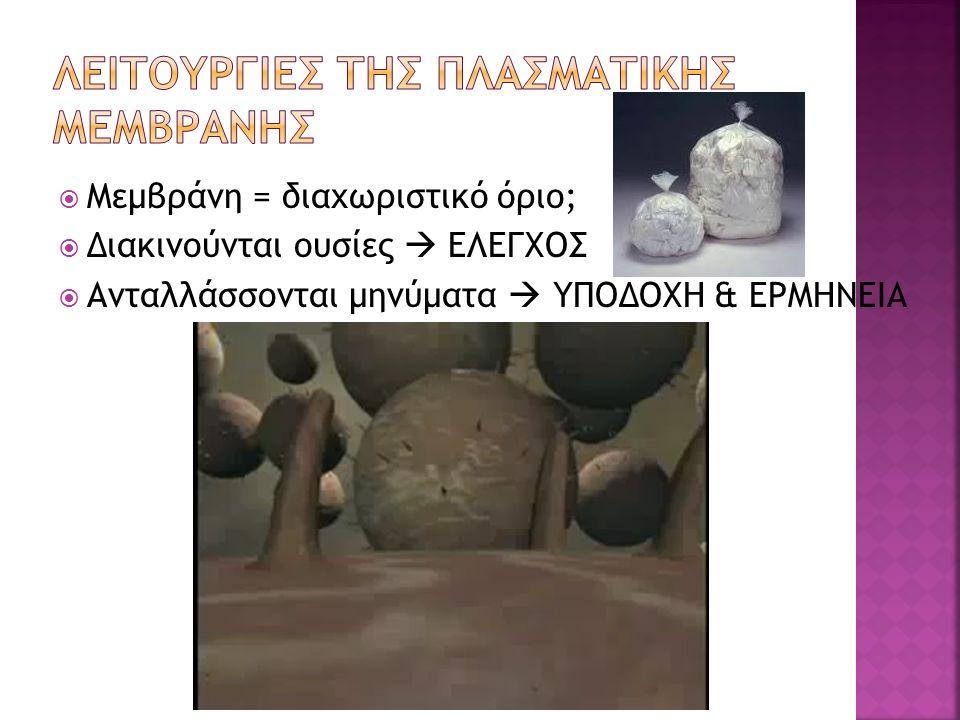 ΛΕΙΤΟΥΡΓΙΕΣ ΤΗΣ ΠΛΑΣΜΑΤΙΚΗΣ ΜΕΜΒΡΑΝΗΣ