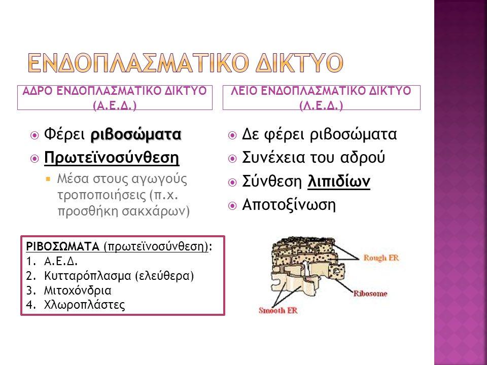 ΕΝΔΟΠΛΑΣΜΑΤΙΚΟ ΔΙΚΤΥΟ