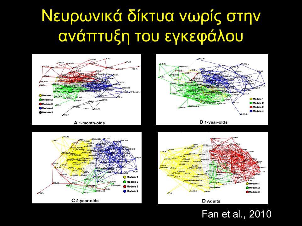 Νευρωνικά δίκτυα νωρίς στην ανάπτυξη του εγκεφάλου