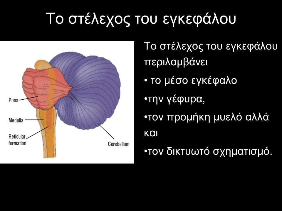 Το στέλεχος του εγκεφάλου