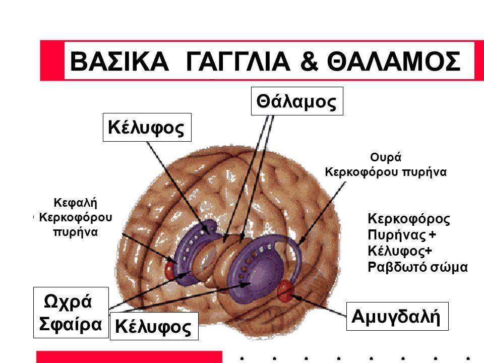 ΒΑΣΙΚΑ ΓΑΓΓΛΙΑ & ΘΑΛΑΜΟΣ
