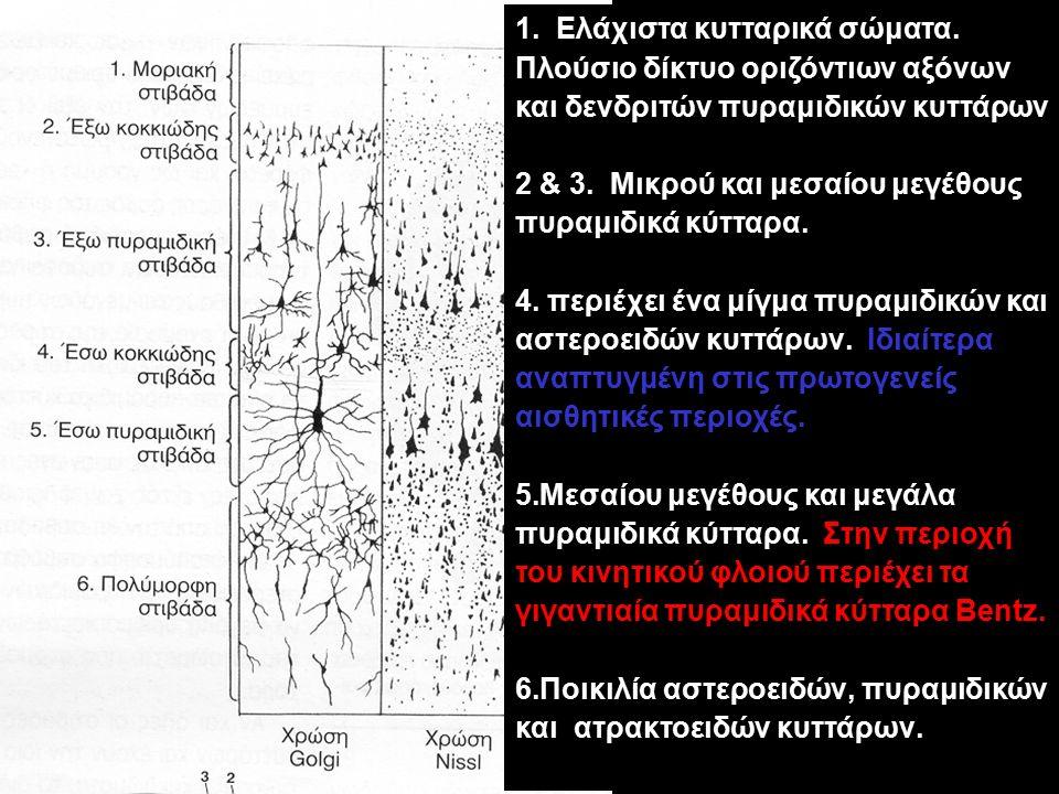 Ελάχιστα κυτταρικά σώματα