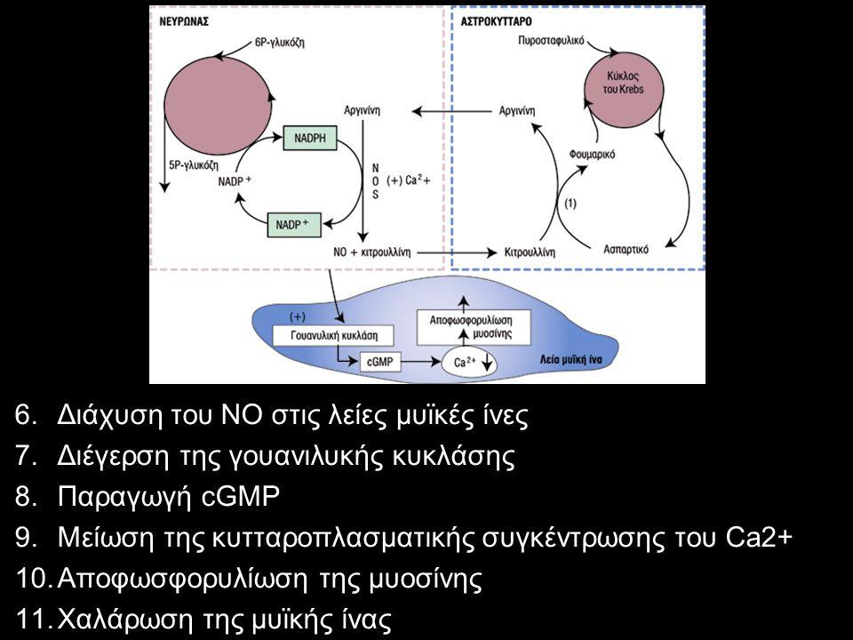 Διάχυση του ΝΟ στις λείες μυϊκές ίνες