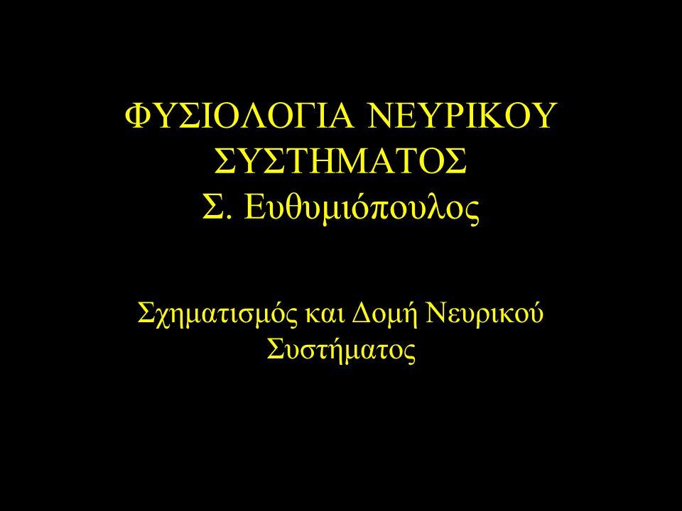 ΦΥΣΙΟΛΟΓΙΑ ΝΕΥΡΙΚΟΥ ΣΥΣΤΗΜΑΤΟΣ Σ. Ευθυμιόπουλος