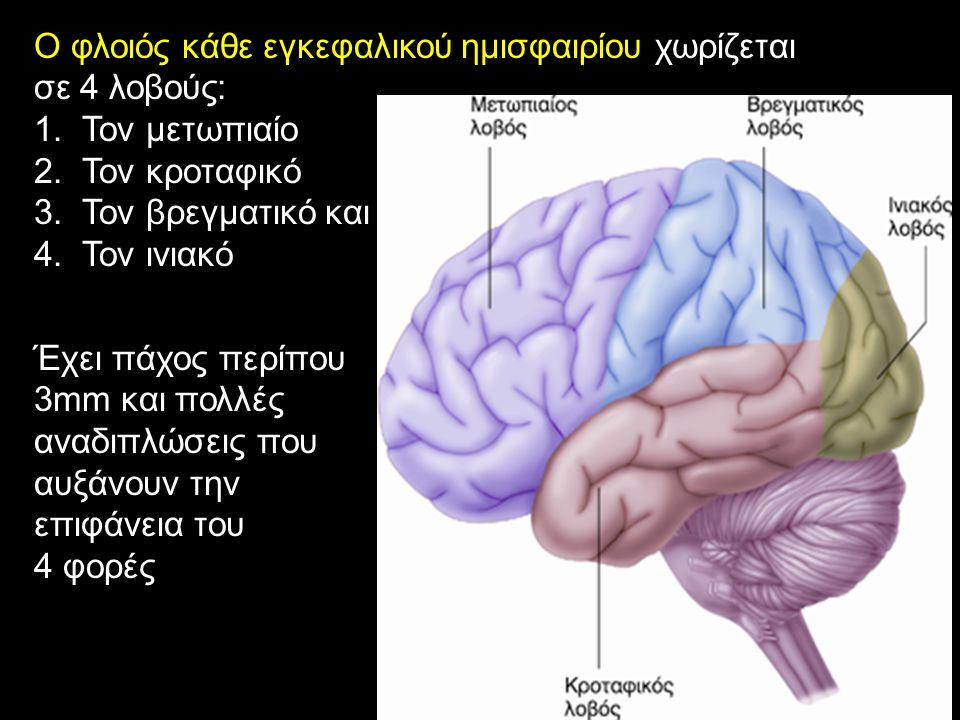 Ο φλοιός κάθε εγκεφαλικού ημισφαιρίου χωρίζεται