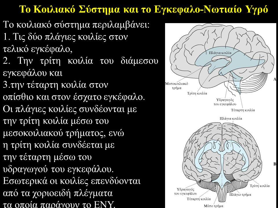 Το Κοιλιακό Σύστημα και το Εγκεφαλο-Νωτιαίο Υγρό