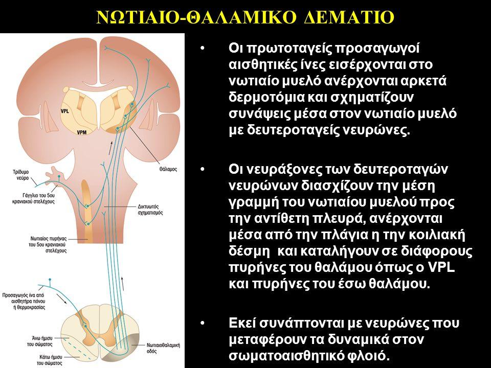 ΝΩΤΙΑΙΟ-ΘΑΛΑΜΙΚΟ ΔΕΜΑΤΙΟ