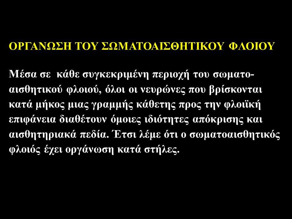 ΟΡΓΑΝΩΣΗ ΤΟΥ ΣΩΜΑΤΟΑΙΣΘΗΤΙΚΟΥ ΦΛΟΙΟΥ