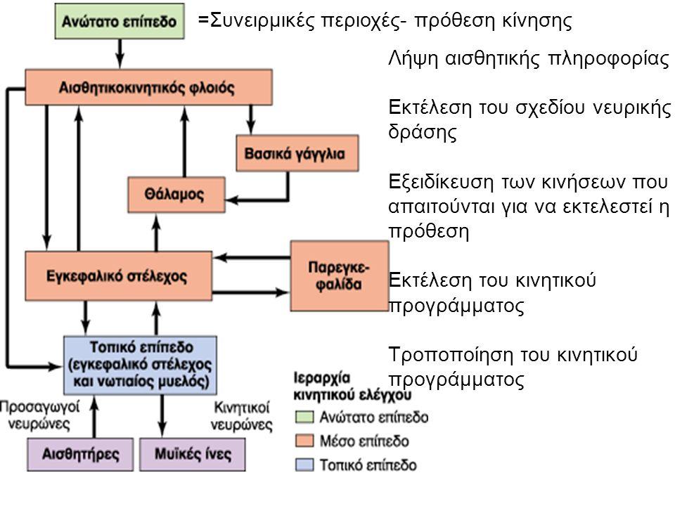 =Συνειρμικές περιοχές- πρόθεση κίνησης