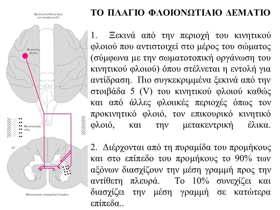 ΤΟ ΠΛΑΓΙΟ ΦΛΟΙΟΝΩΤΙΑΙΟ ΔΕΜΑΤΙΟ 1