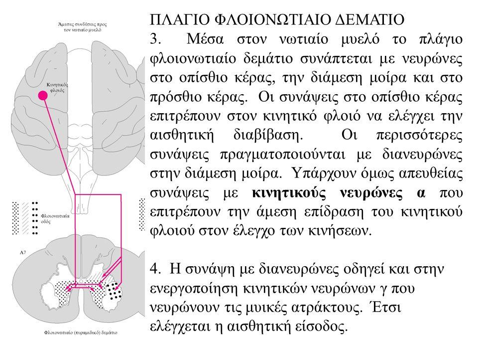 ΠΛΑΓΙΟ ΦΛΟΙΟΝΩΤΙΑΙΟ ΔΕΜΑΤΙΟ