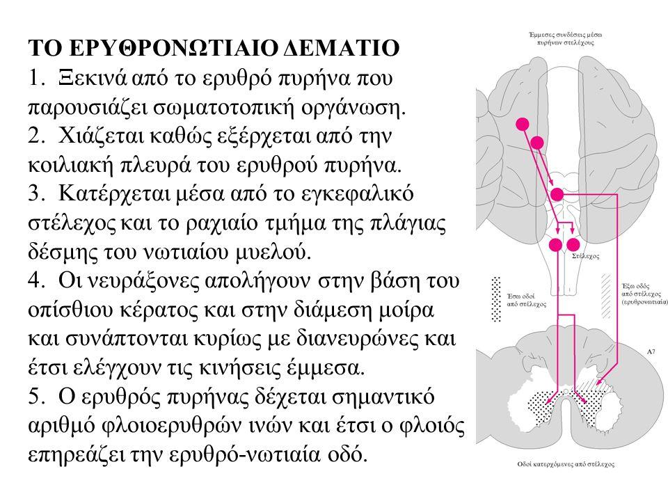 ΤΟ ΕΡΥΘΡΟΝΩΤΙΑΙΟ ΔΕΜΑΤΙΟ 1