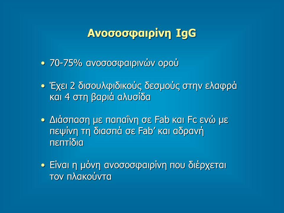 Ανοσοσφαιρίνη IgG 70-75% ανοσοσφαιρινών ορού
