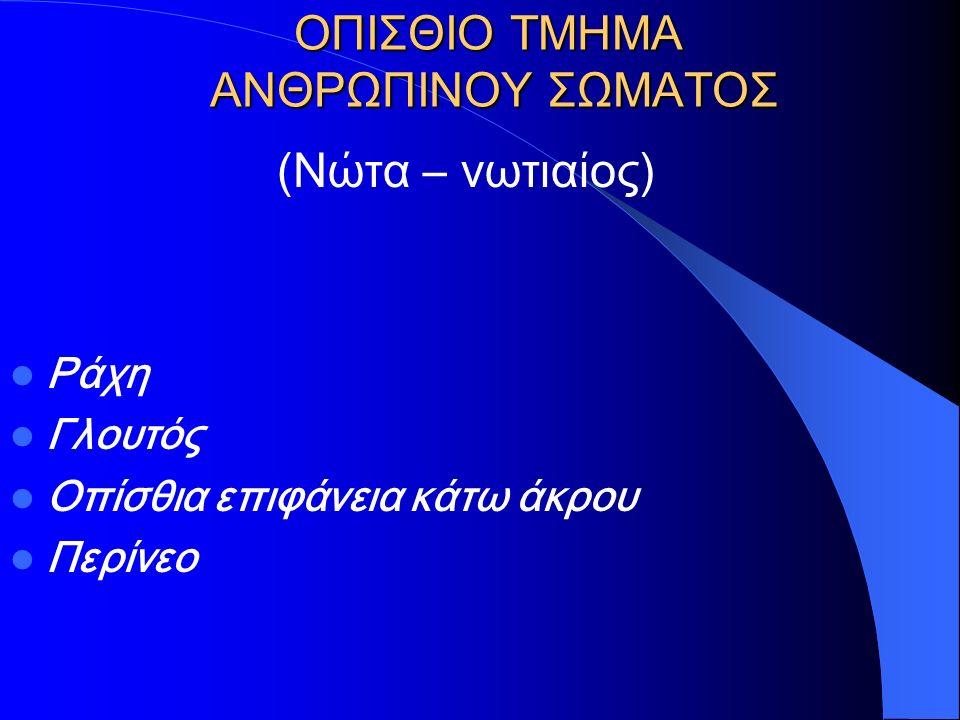 ΟΠΙΣΘΙΟ ΤΜΗΜΑ ΑΝΘΡΩΠΙΝΟΥ ΣΩΜΑΤΟΣ
