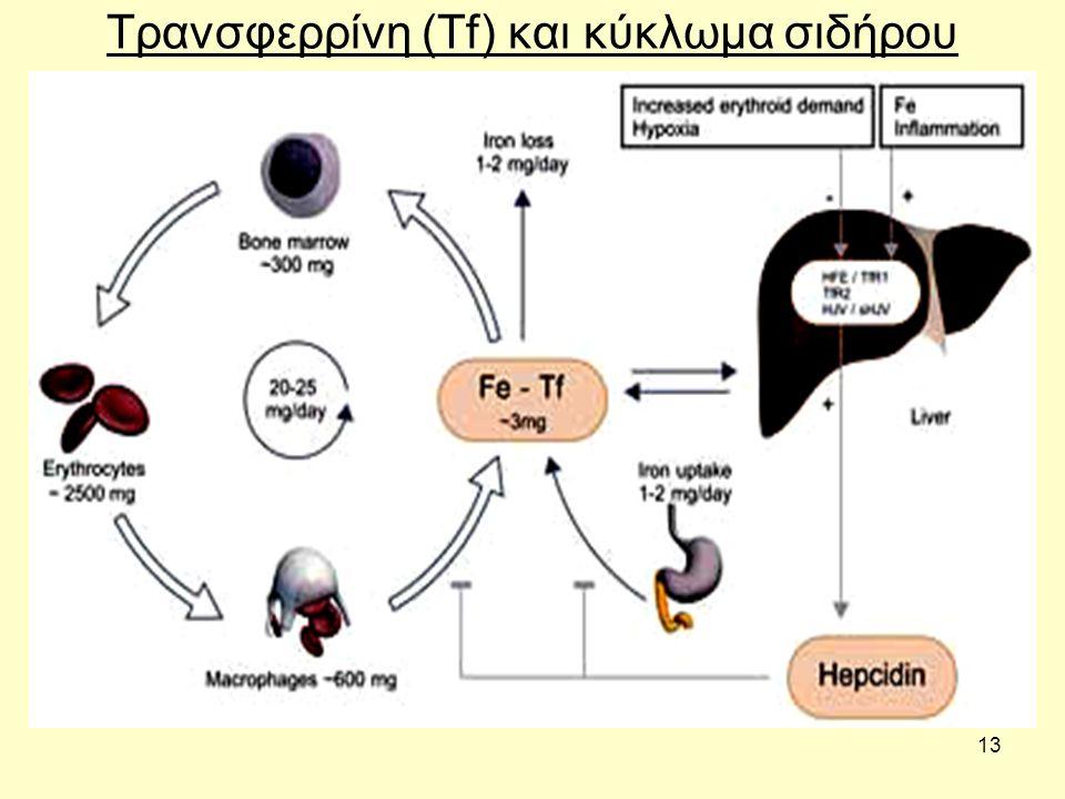 Τρανσφερρίνη (Tf) και κύκλωμα σιδήρου