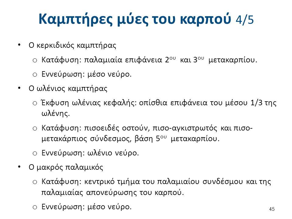 Καμπτήρες μύες του καρπού 5/5