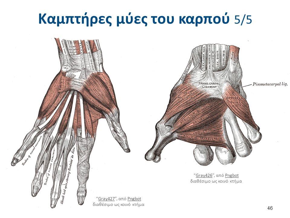 Απαγωγοί μύες του καρπού