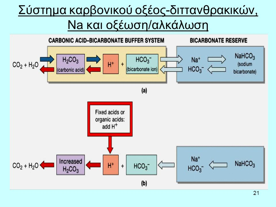 Σύστημα καρβονικού οξέος-διττανθρακικών, Na και οξέωση/αλκάλωση