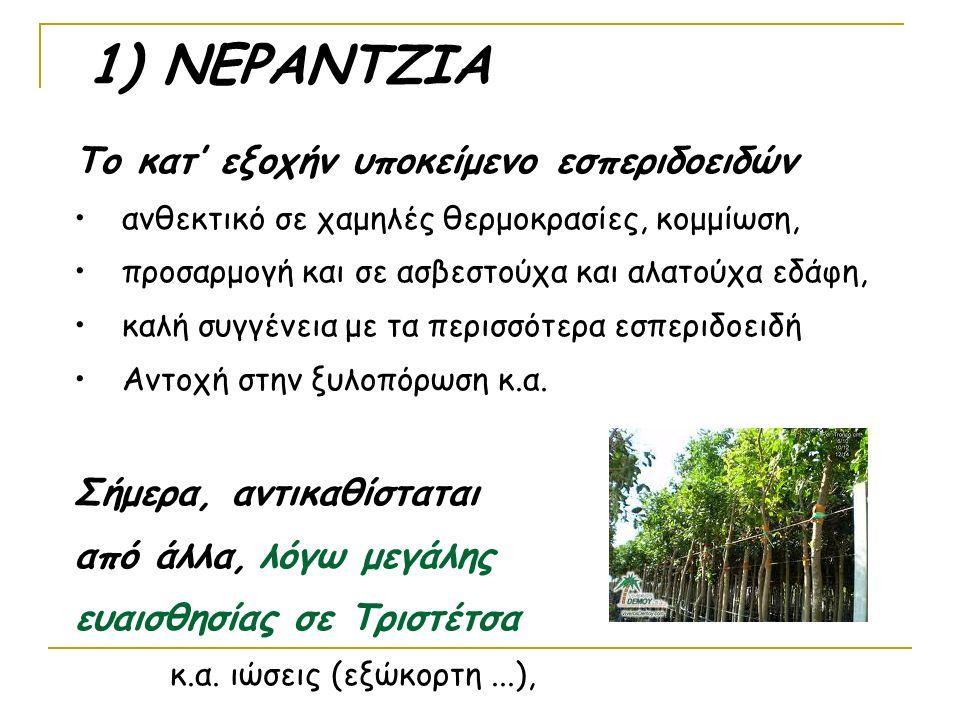 1) ΝΕΡΑΝΤΖΙΑ Το κατ' εξοχήν υποκείμενο εσπεριδοειδών