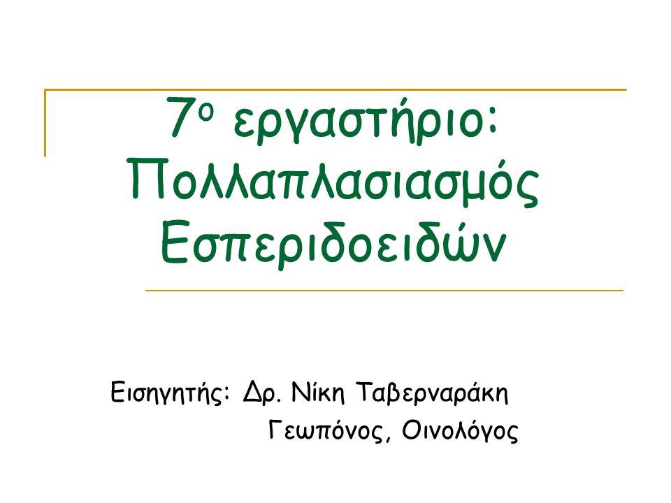 7ο εργαστήριο: Πολλαπλασιασμός Εσπεριδοειδών