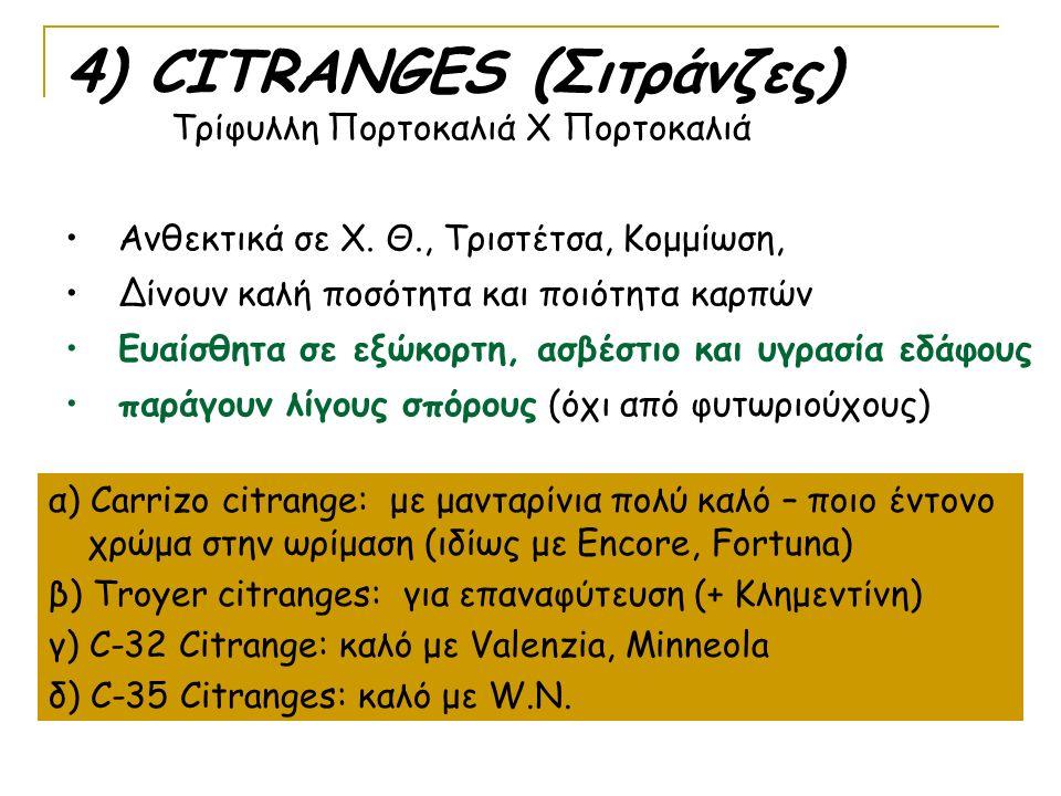 4) CITRANGES (Σιτράνζες) Τρίφυλλη Πορτοκαλιά Χ Πορτοκαλιά