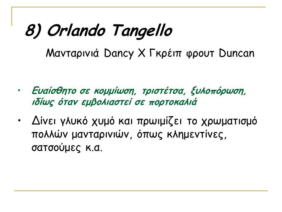 8) Οrlando Tangello Μανταρινιά Dancy Χ Γκρέιπ φρουτ Duncan. Ευαίσθητο σε κομμίωση, τριστέτσα, ξυλοπόρωση, ιδίως όταν εμβολιαστεί σε πορτοκαλιά.