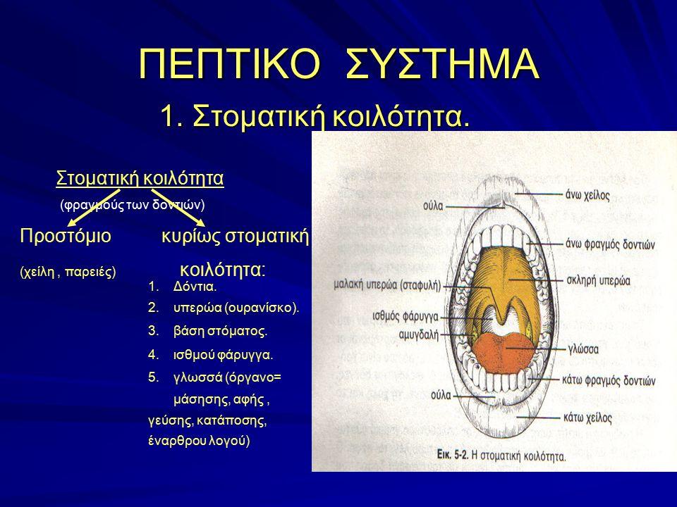 ΠΕΠΤΙΚΟ ΣΥΣΤΗΜΑ 1. Στοματική κοιλότητα. Στοματική κοιλότητα