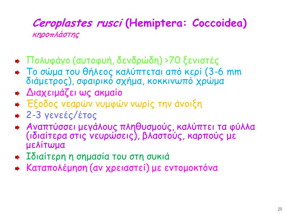 Ceroplastes rusci (Hemiptera: Coccoidea) κηροπλάστης