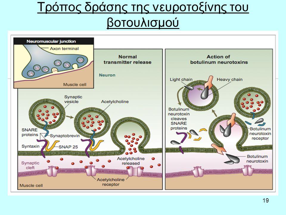 Τρόπος δράσης της νευροτοξίνης του βοτουλισμού