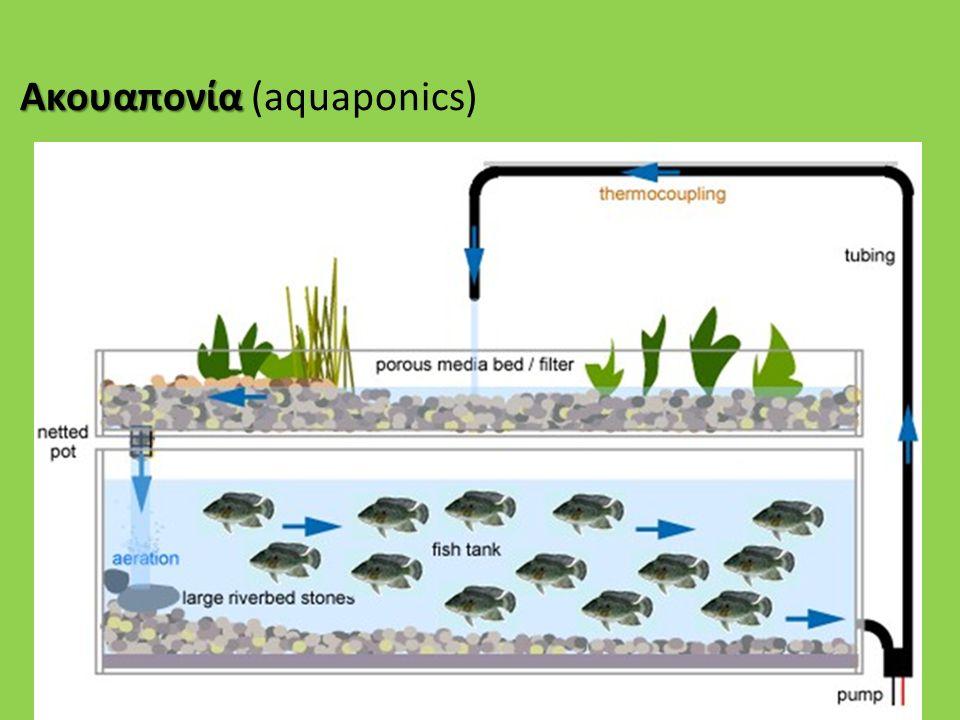 Ακουαπονία (aquaponics)