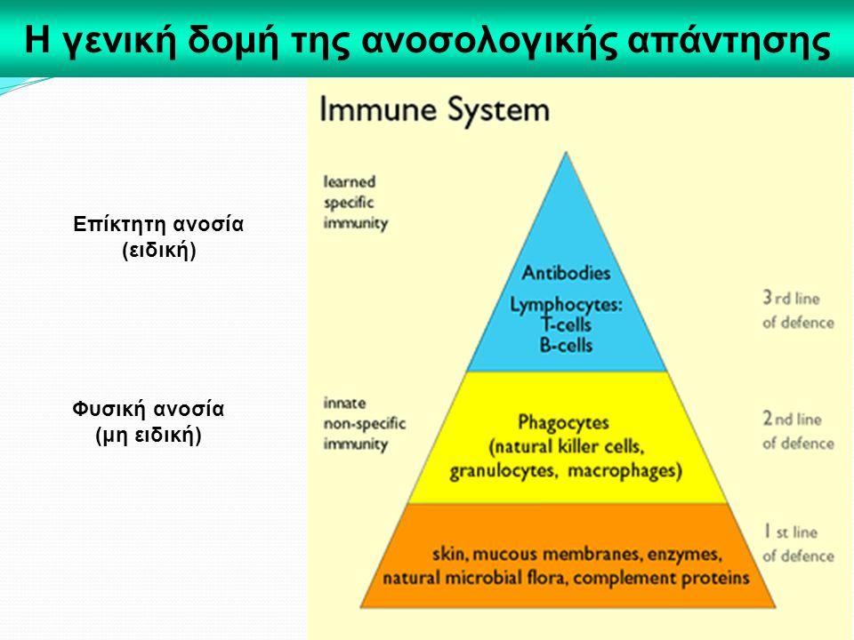 Η γενική δομή της ανοσολογικής απάντησης
